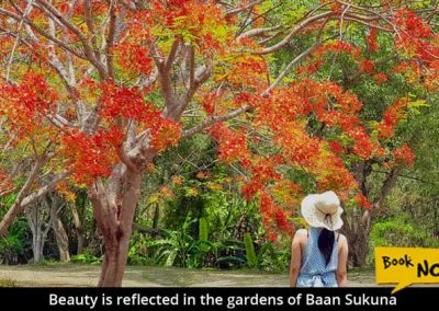 Baan-Sakuna-Gardens-flame-tree