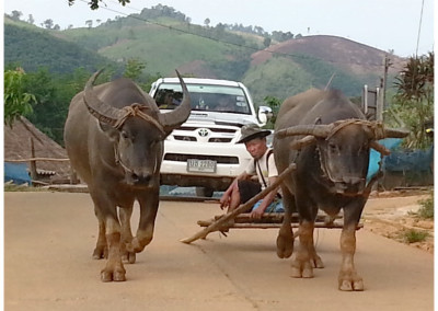 local lifestyle in chiang khong
